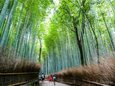 Kyoto #13: 竹林の小径【Bamboo Grove】