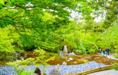 京都 #11: 宝厳院 ~1年に2回の貴重な特別拝観~