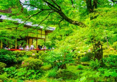 京都 #26: 三千院 ~東洋の宝石箱と賞賛される庭園~